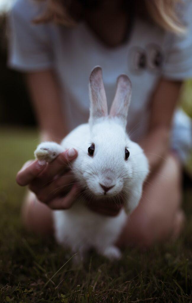 Cruelty-Free Beauty Brands Vegan Organic Bunny