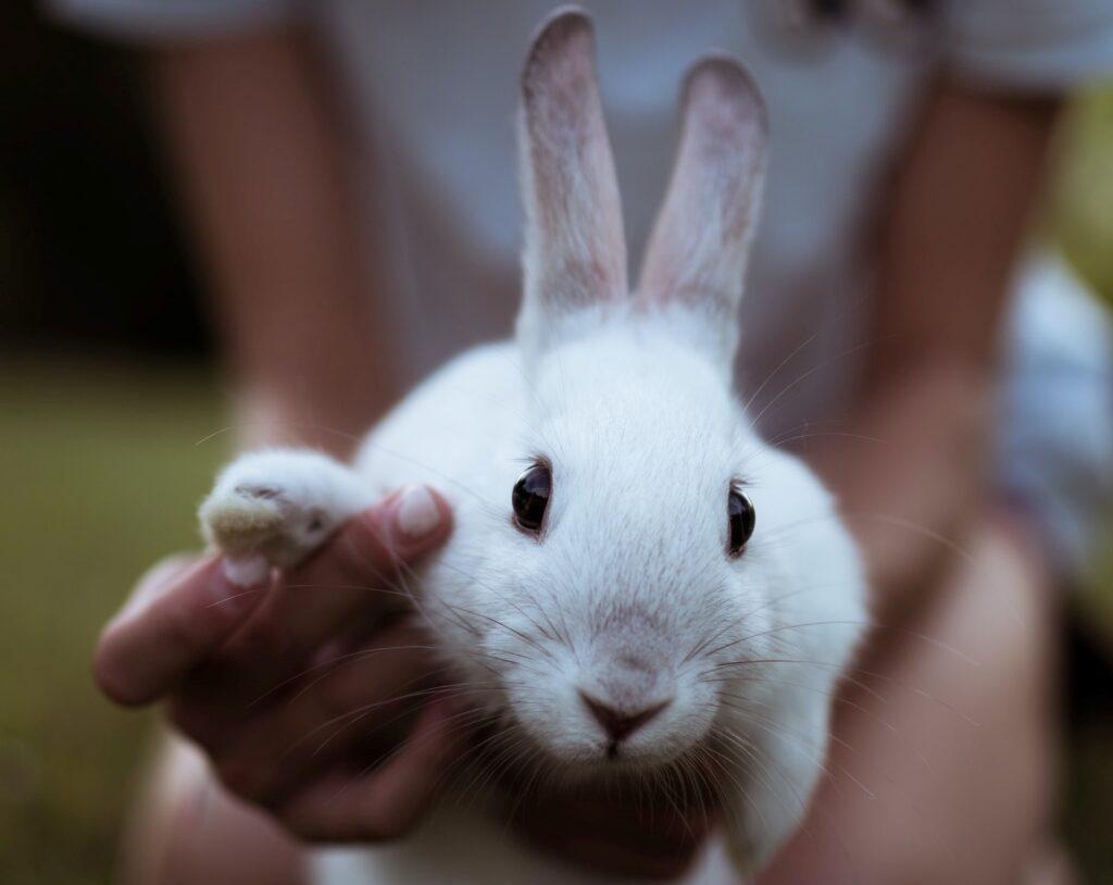 Cruelty-Free Beauty Brands Vegan Organic Bunny - small